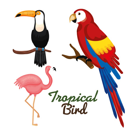 Toucan guacamaya and flamingo over white background vector illustration Иллюстрация