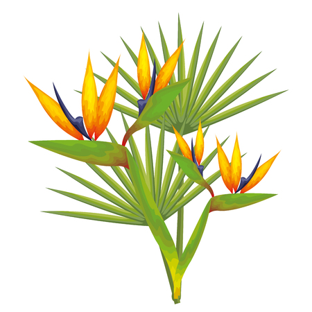 Tropical flowers and leaves over white background vector illustration