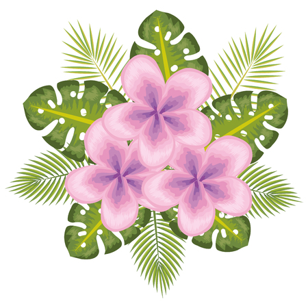 Pink tropical flowers with leaves over white background vector illustration Illusztráció
