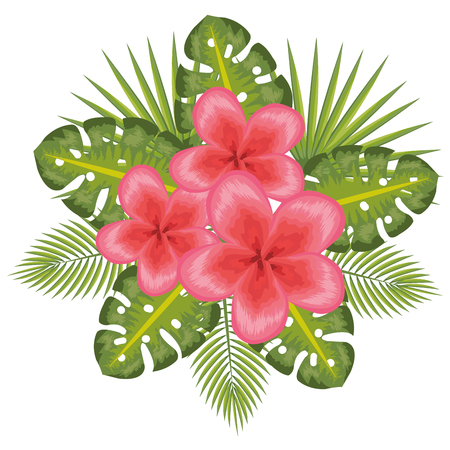 Fuchsia tropical flowers with leaves over white background vector illustration Illustration