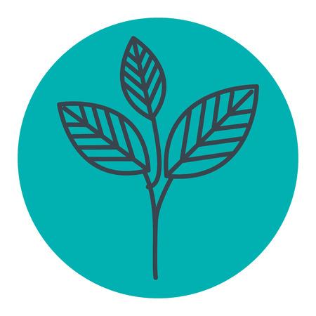 COlogie végétale leafs conception icône illustration vectorielle Banque d'images - 80759497