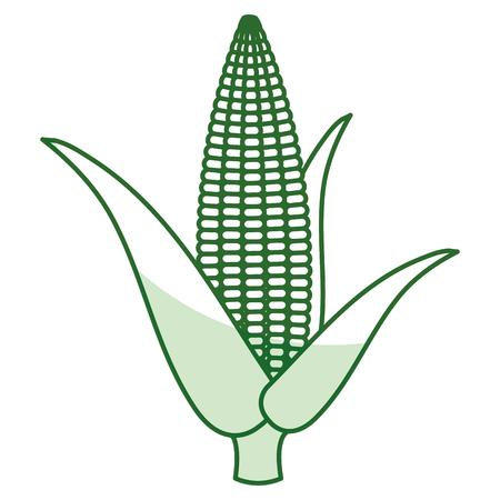 Mazorca de maíz aislado icono de diseño de ilustración vectorial Foto de archivo - 80790693