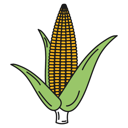 corn cob isolated icon vector illustration design Illusztráció