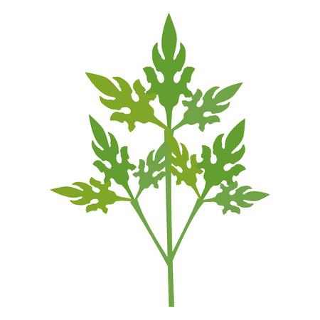 고수풀 신선한 야채 아이콘 벡터 일러스트 디자인 그래픽