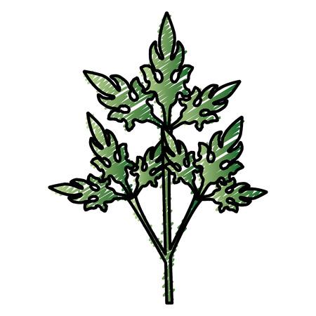 coriander fresh vegetable icon vector illustration design graphic Illustration