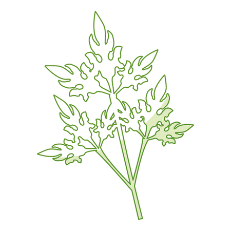 coriander fresh vegetable icon vector illustration design graphic Çizim