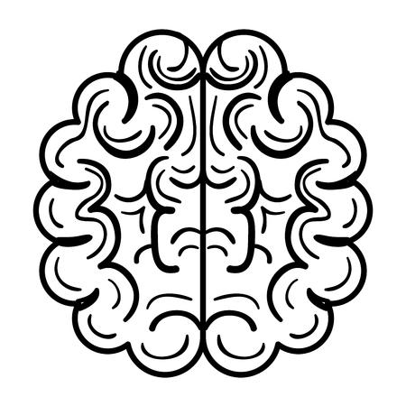 brain halves flat icon vector illustration design graphic