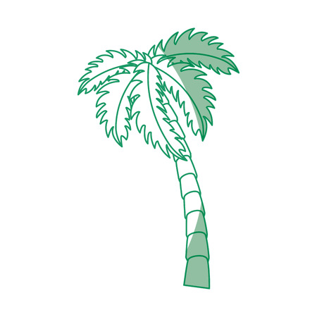 Tropical palm icon over white background vector illustration 版權商用圖片 - 80872573