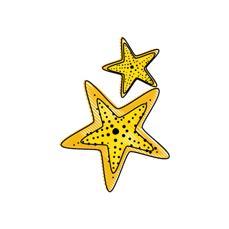 sea stars icon over white background colorful design vector illustration