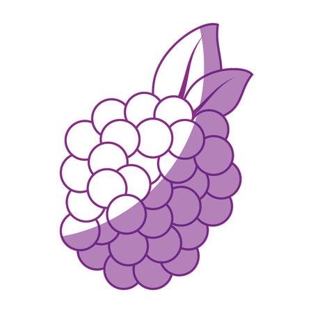 Blackberry fruit pictogram over witte achtergrond vectorillustratie