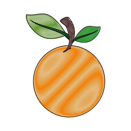 market gardening: orange fruit icon over white background colorful design vector illustration
