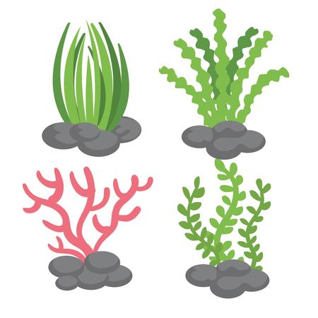 Rośliny morskie na białym tle ilustracji wektorowych Ilustracje wektorowe
