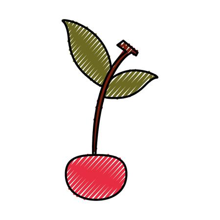 벚꽃 열대와 이국적인 과일 벡터 일러스트 레이션 디자인
