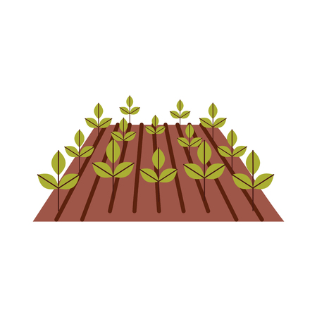 Cultivated plant isolated icon vector illustration design