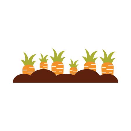 Diseño aislado cultivo del ejemplo del vector del icono de la zanahoria Foto de archivo - 81083307