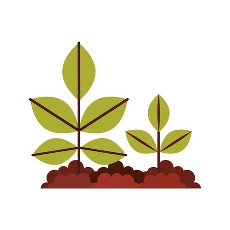 Planta cultivada isolado ícone vector ilustração design