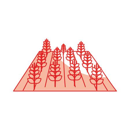 Blé cultures isolé icône du design illustration vectorielle Banque d'images - 81084824