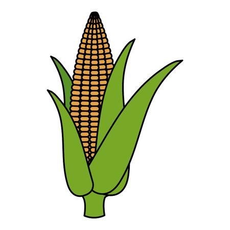 Corn cob isolated icon vector illustration design