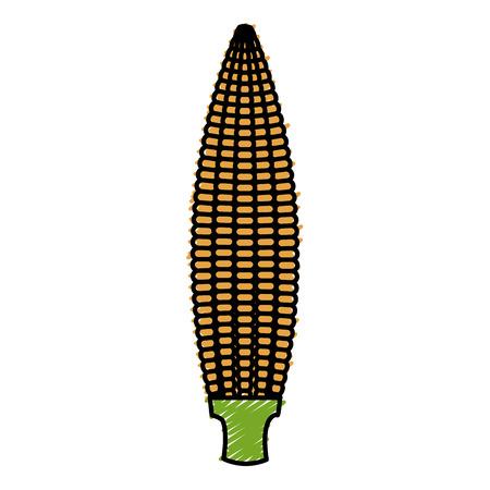 corn cob isolated icon vector illustration design Illusztráció