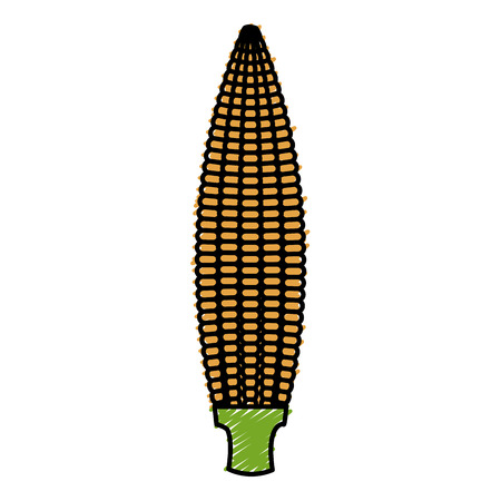Mazorca de maíz aislado icono de diseño de ilustración vectorial Foto de archivo - 81134089