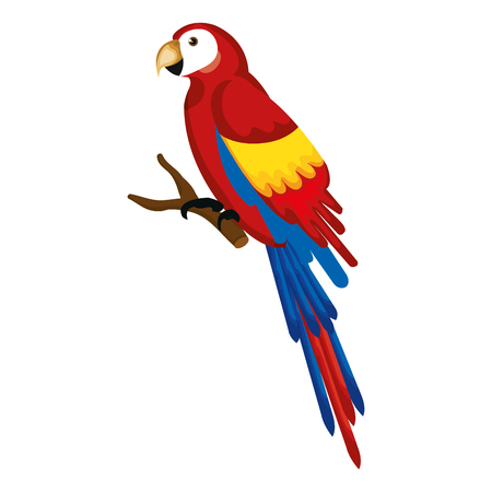 Exotic parrot in branch tropical bird vector illustration design