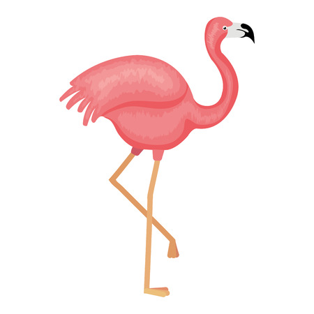 Exotic flamingo tropical bird vector illustration design