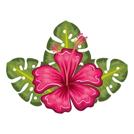 Tropical flower decorative icon vector illustration design 向量圖像
