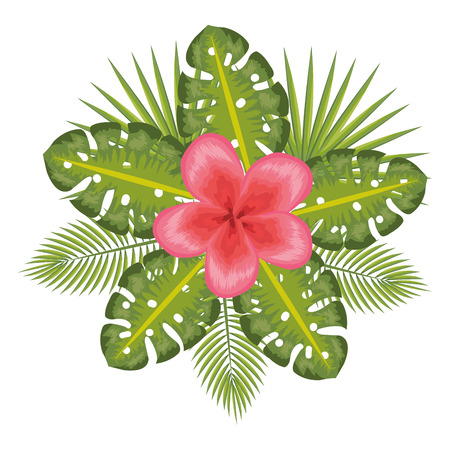 tropical flower decorative icon vector illustration design Stok Fotoğraf - 81132863