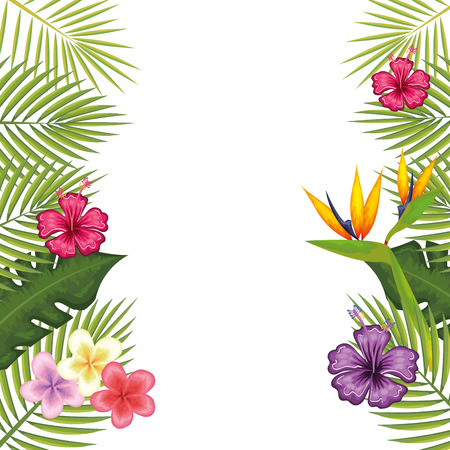tropical flower decorative frame vector illustration design