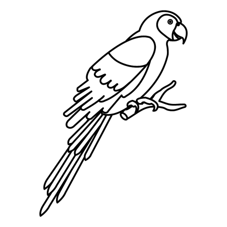 exotic parrot in branch tropical bird vector illustration design 向量圖像