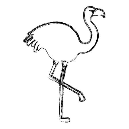 exotic flamingo tropical bird vector illustration design Illustration