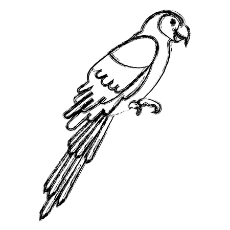 exotic parrot tropical bird vector illustration design 向量圖像