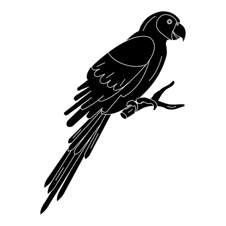 exotic parrot tropical bird vector illustration design Ilustração