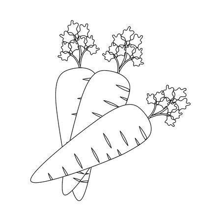carrot vegetable icon over white background vector illustration