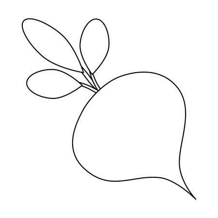 Betterave icône de légumes sur fond blanc illustration vectorielle Banque d'images - 81143267