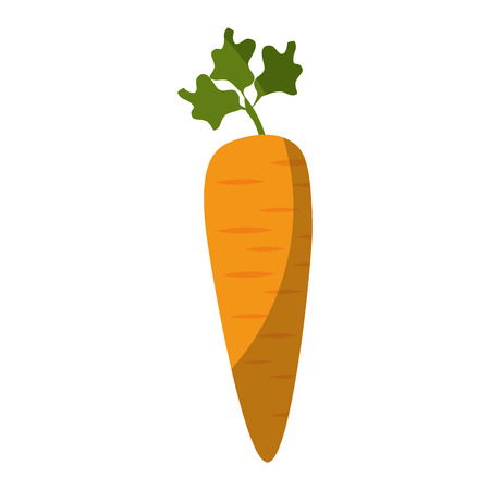 carrot vegetable icon over white background colorful design vector illustration