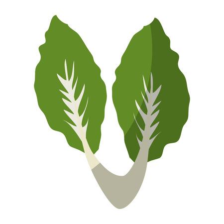 lettuce vegetable icon over white background vector illustration Ilustração
