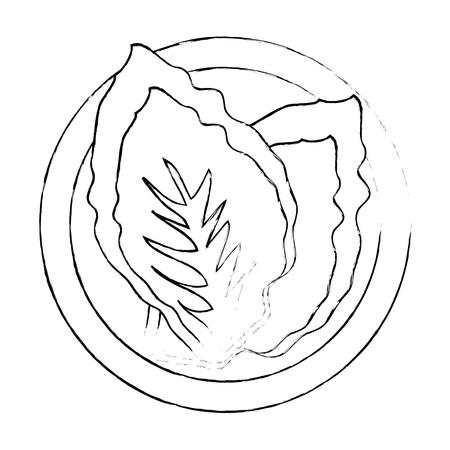 lettuce vegetable icon over white background vector illustration 向量圖像
