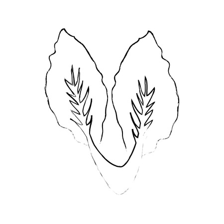 白い背景のベクトル図にレタス野菜アイコン  イラスト・ベクター素材