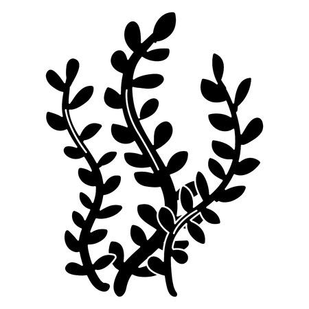 sea weed isolated icon vector illustration design Reklamní fotografie - 81271658