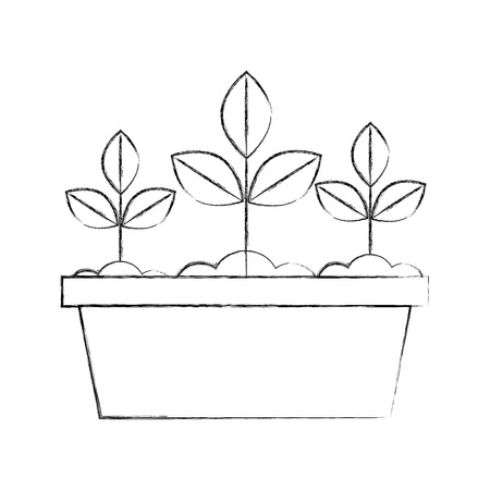 Cultivated plant in pot vector illustration design Banco de Imagens - 81378883