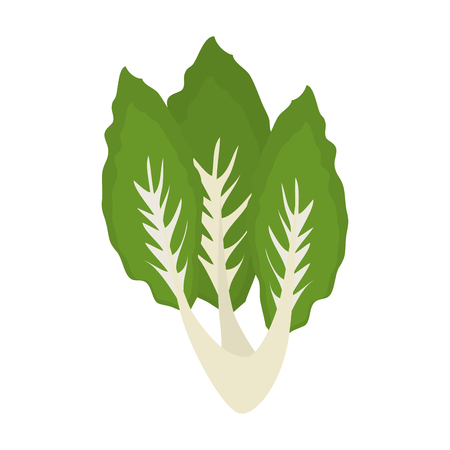 Salad leaves vegetable icon vector illustration graphic design