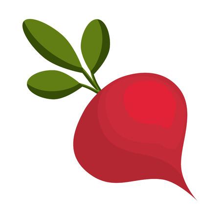 Rábano icono de verduras frescas ilustración vectorial diseño gráfico Foto de archivo - 81620518