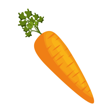 Carrot fresh vegetable icon vector illustration graphic design