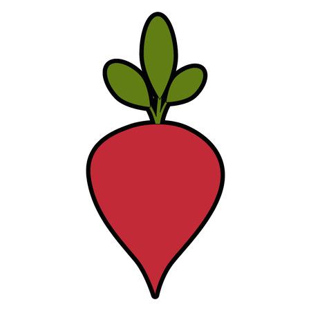 Delicious radish vegetable icon vector illustration graphic design