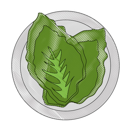 lettuce icon over white background colorful design vector illustration