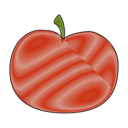 tomato icon over white background colorful design  vector illustration