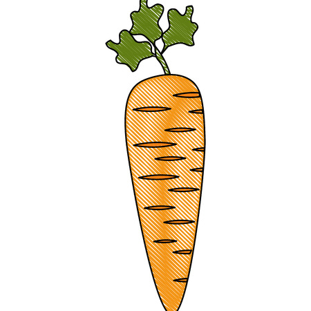 carrot icon over white background vector illustration