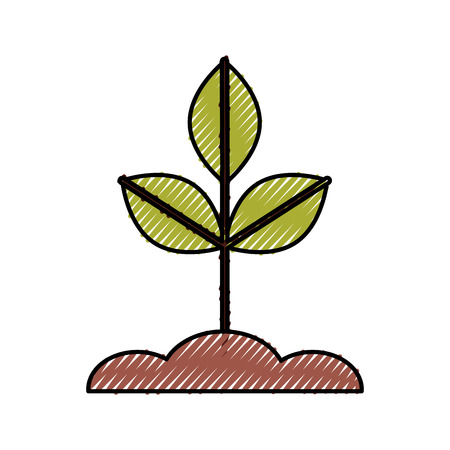 Cultivated plant isolated icon vector illustration design Stok Fotoğraf - 81657657