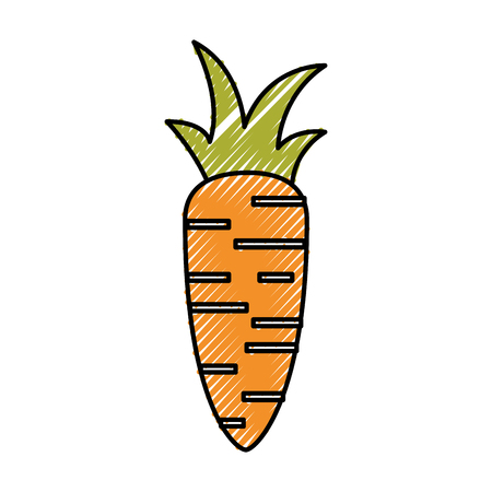 fresh carrot isolated icon vector illustration design